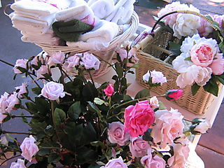 Lillycottage roses today 011