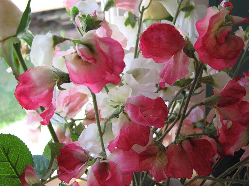 Fleur 051