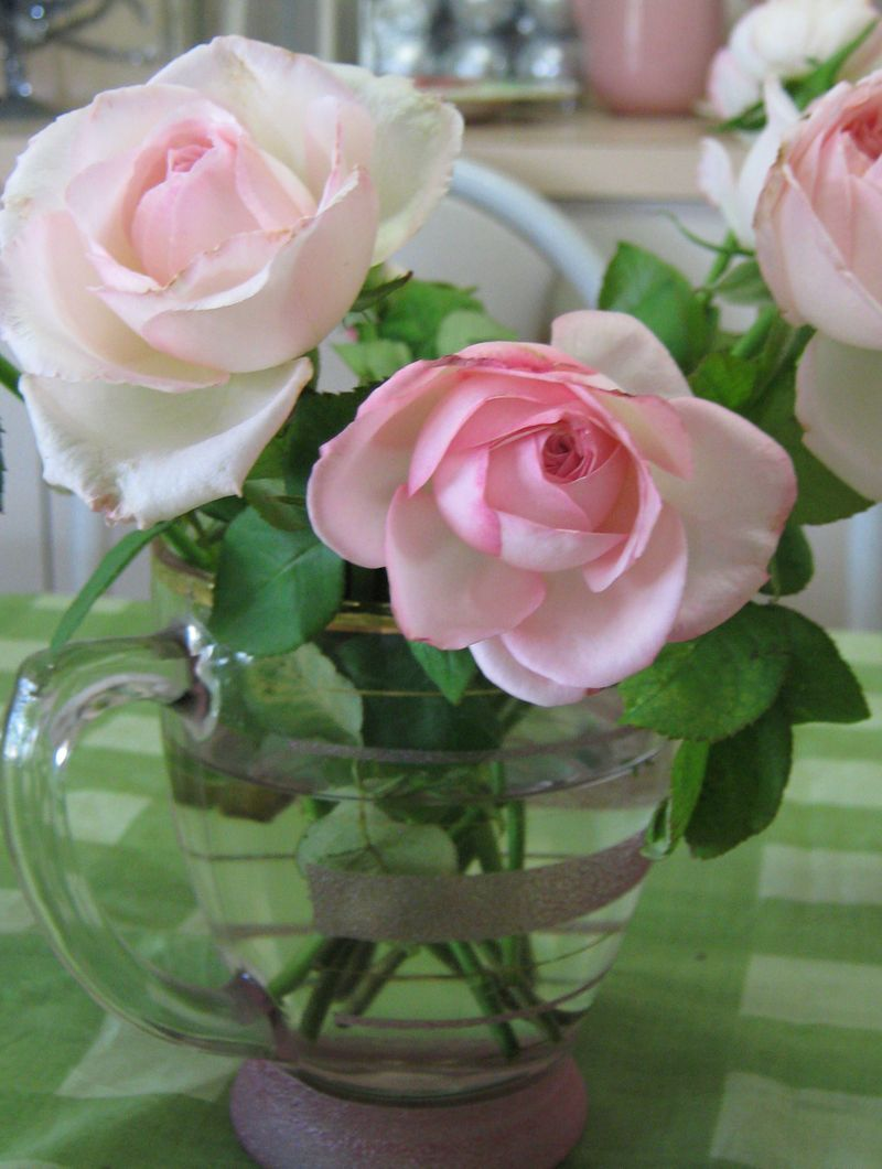 Roses roses 086