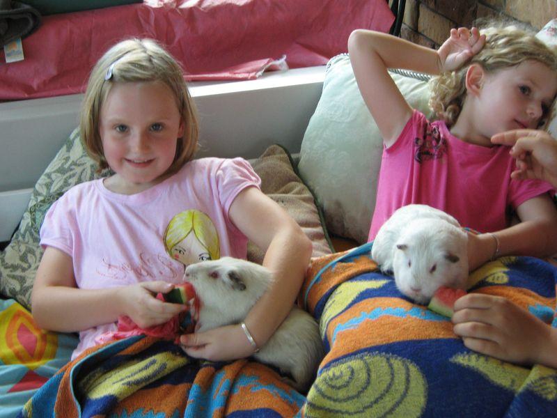 Lili and the guinea
