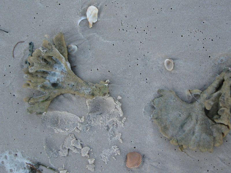 More beach 012