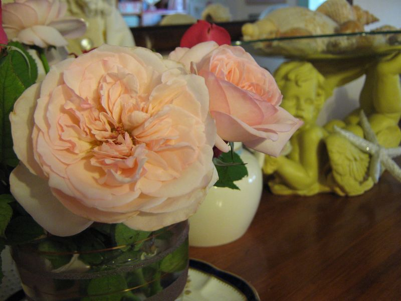 This weeks roses and a hedgehog 024