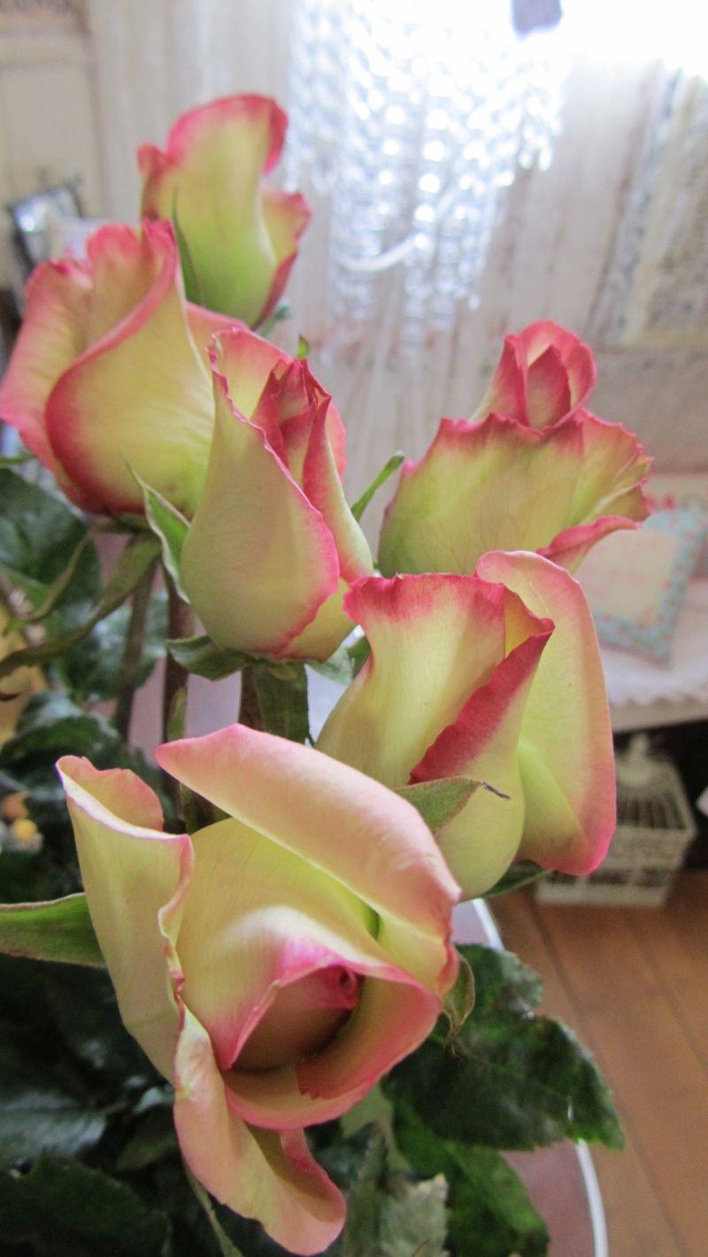 Blooms 041 (1216 x 2160)