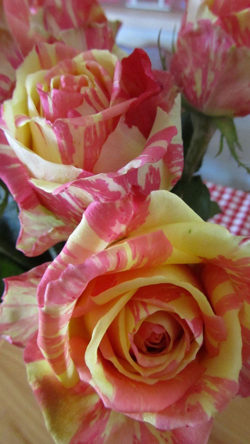 Rose 017 (1216 x 2160)