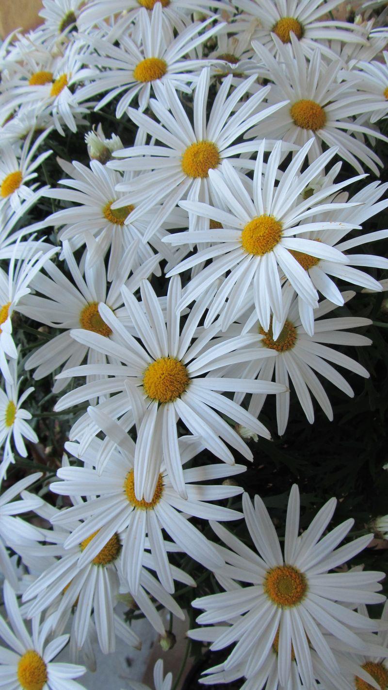 Blooms 047 (1216 x 2160)