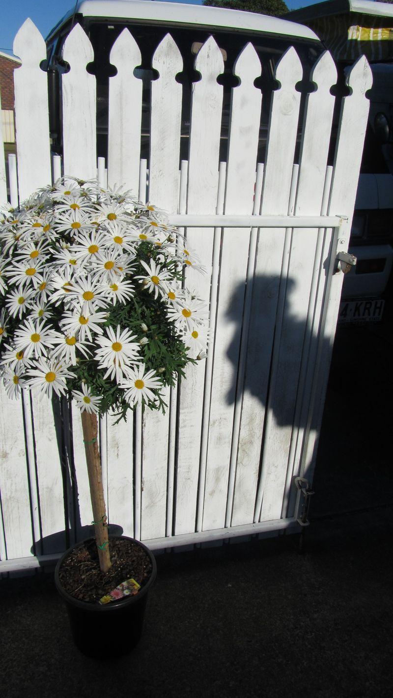 Blooms 057 (1216 x 2160)