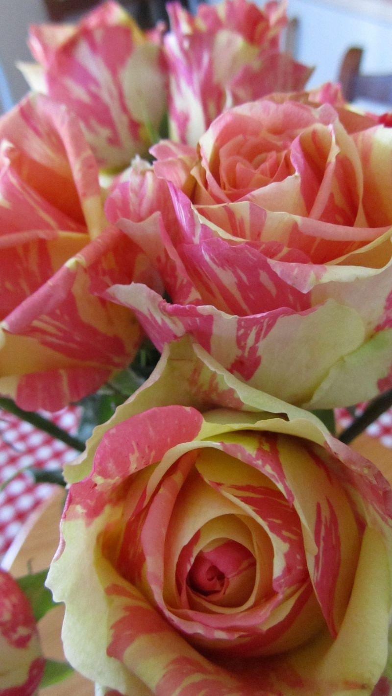 Rose 005 (1216 x 2160)