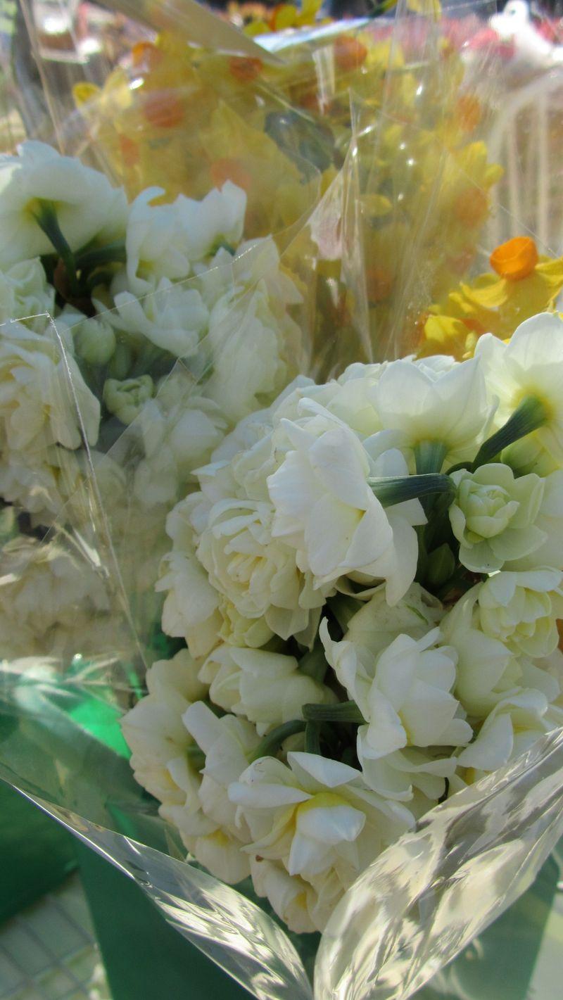 Blooms 016 (1216 x 2160)
