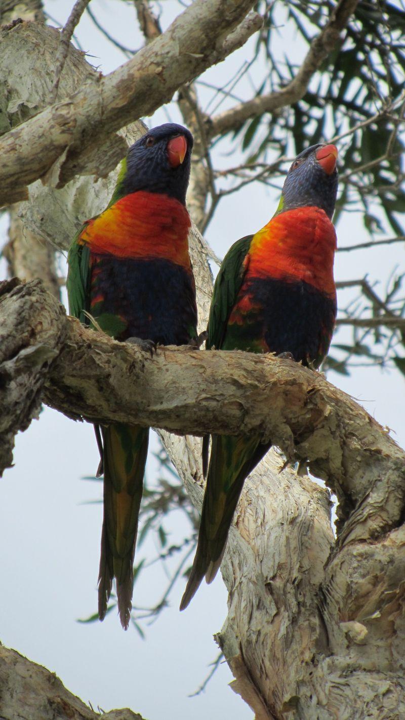 Birdies and pretties 032 (1216 x 2160)