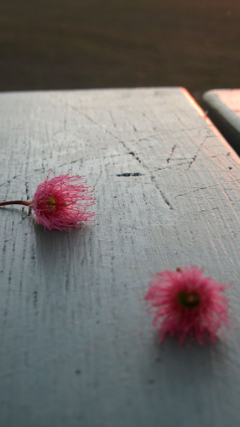 Blossom 010 (1216 x 2160)
