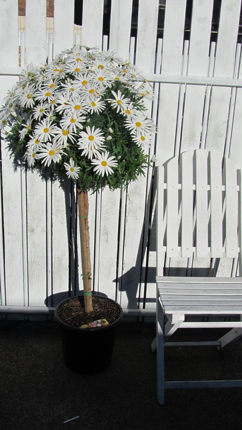 Blooms 053 (1216 x 2160)